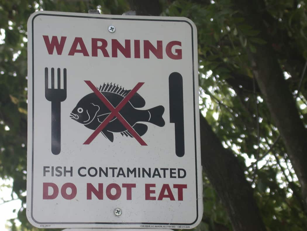 Is farm raised fish safe nutrition over easy for Farm raised fish