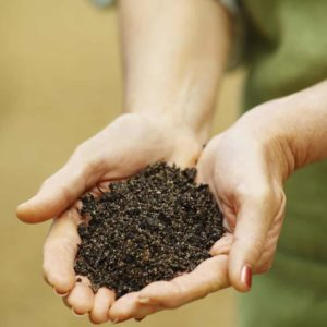 Should you be eating more dirt?