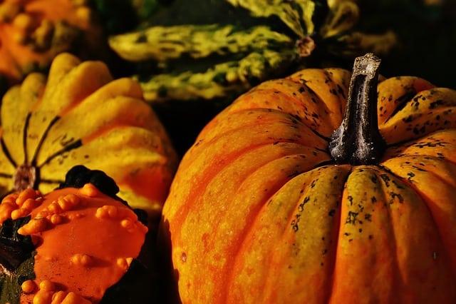 pumpkins-1708769_640